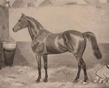 T.J. Atkinson (18/19th century) - George L Fox Esq.