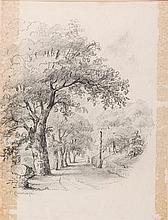 Tomás Campuzano. A road between the trees