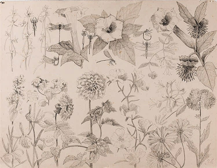 Emile Gallé. Flowers and insects sketch
