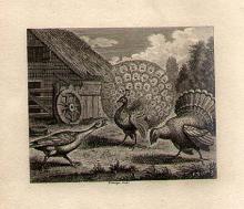 William Grainger - 18th century British engraver