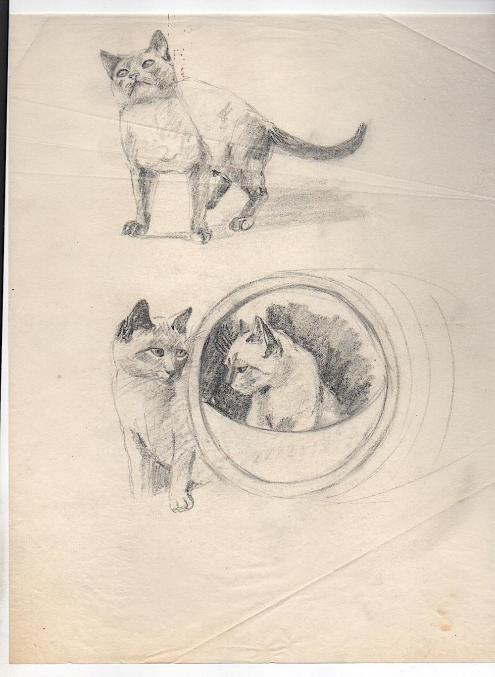 Gladys Emerson Cook Cat Drawing