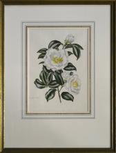 """LILA MOORE KEEN (1903-1963) """"CAMELLIA-WHITE"""""""