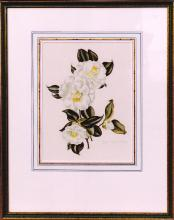 """LILA MOORE KEEN (1903-1963) """"CAMELLIAS"""" WATERCOLOR ON PAPER 13"""" X 9.5"""""""