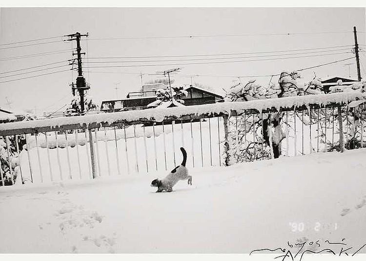 ARTIST: Nobuyoshi Araki(1940-) TITLE: Chiro in the