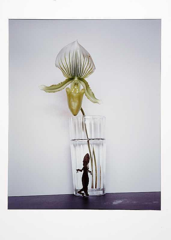 ARTIST: Nobuyoshi Araki(1940-) TITLE: Yamorinsky