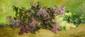 Séraphin Achille VeRHOeVeN (tourcoing 1847 - dunkerque 1905)  Bouquet de lilas  Sur sa toile d'origine  37 x 84,5 cm Signée en bas à droite Achille Verhoeven