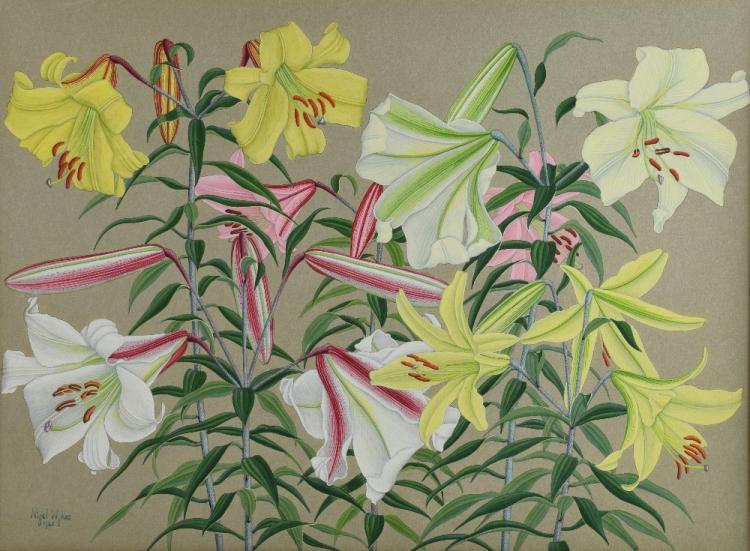 Nigel Wykes watercolour study of lillies, signed a