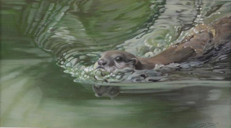 Lyndsey Selley study of an Otter, Gouache, 22 x 40