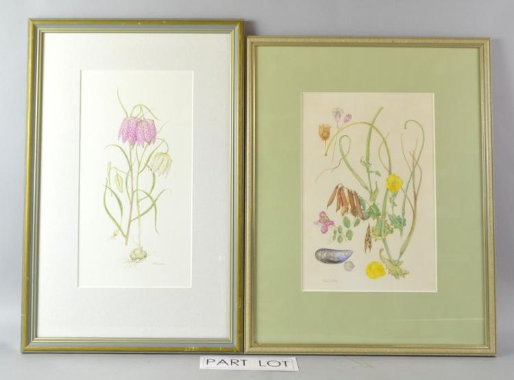 Patricia Dale, four watercolour studies: Fritillar