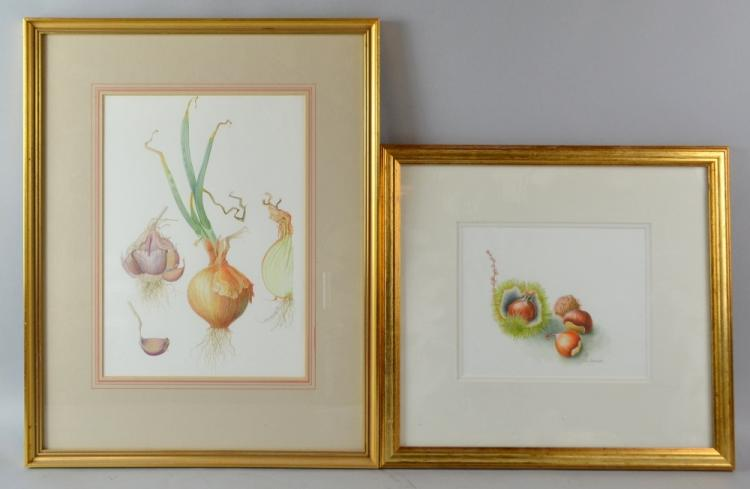 Gill Coombes study of Chestnut, watercolour, signe