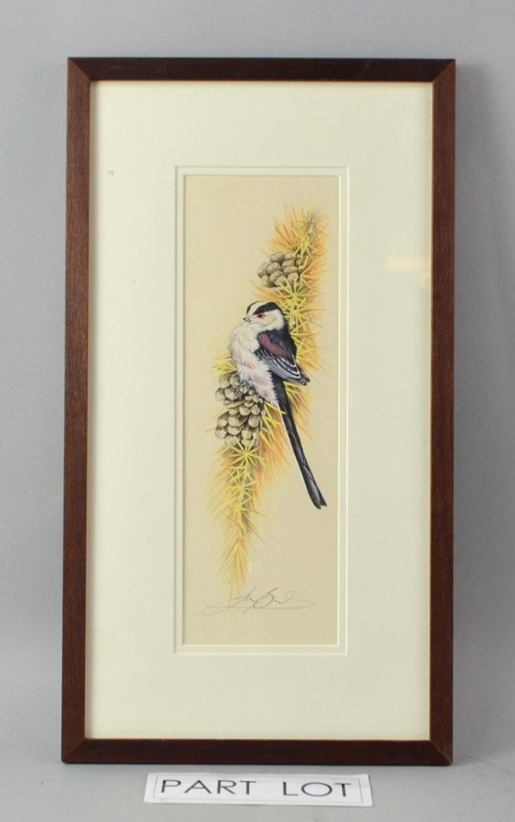Ian Bowles (British 1947) study of Long Tailed Tit