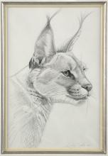 Lyndsey Selley pencil study 'Caracal' signed and d