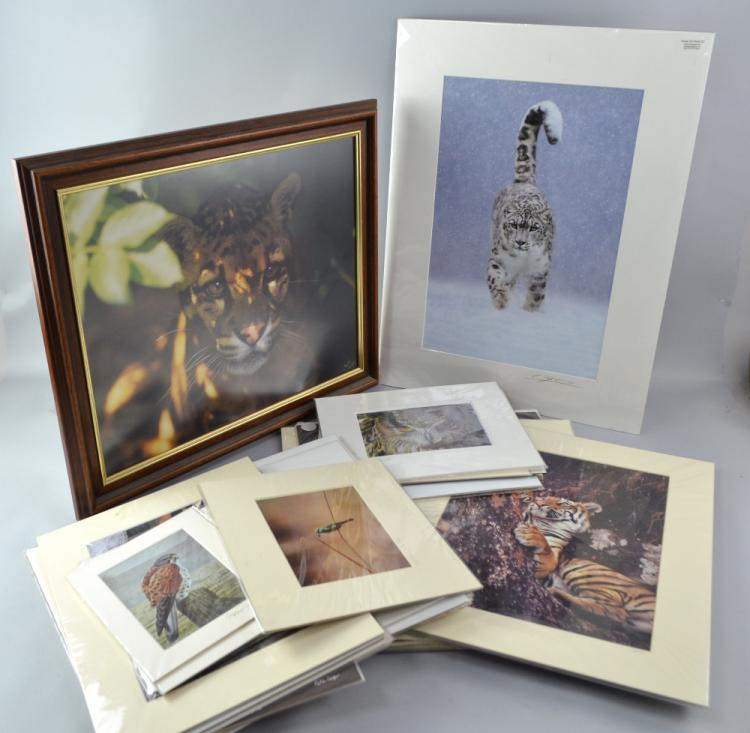 Collection of wildlife photographs (33) two framed