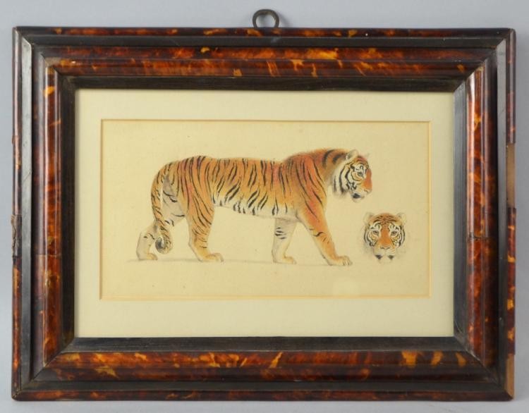 Thomas Stothard (1755-1834) study of a lion 12 x 2