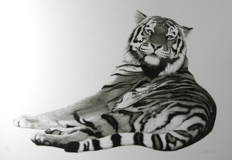 Clive Meredith limited edition print of a Tiger, s