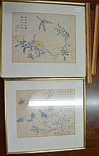 Chinese print of a butterfly and blossom 9