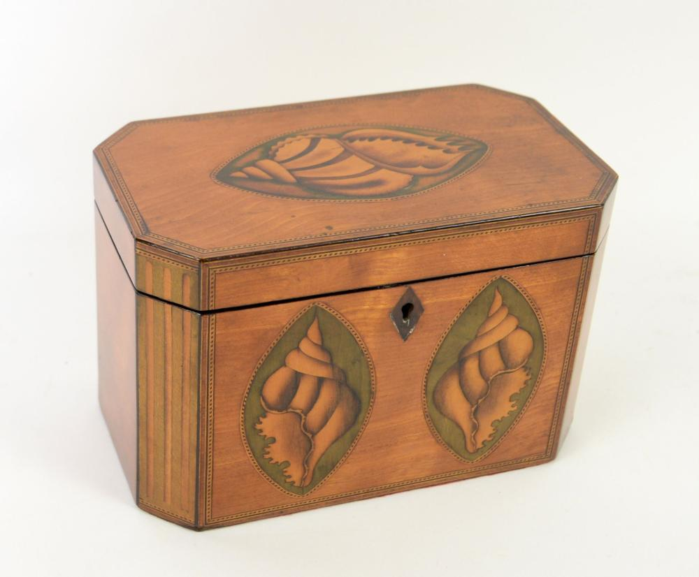 Early 19th century satinwood shell inlaid tea cadd
