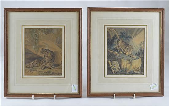 R.Nodder, two watercolour studies of Cheetahs,