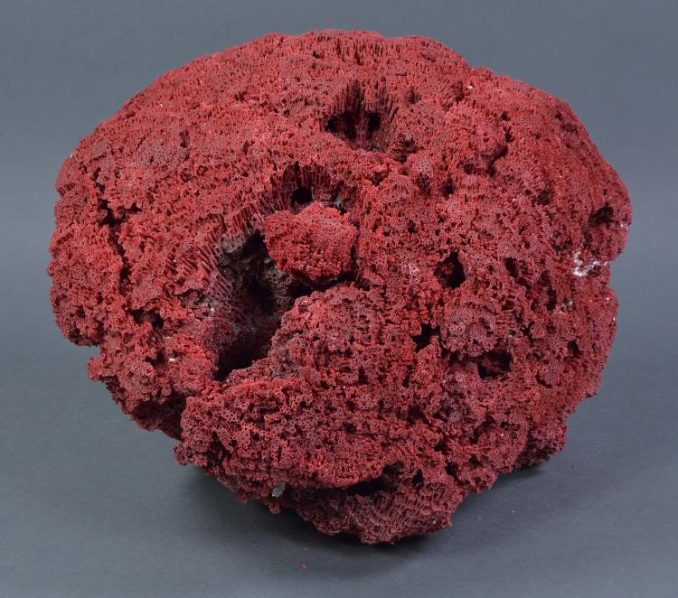 Large Piece of Red Coral