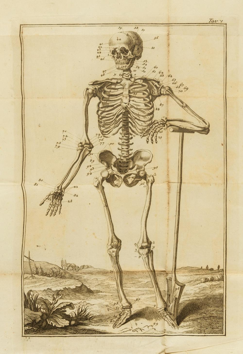 Anatomy.- Collection of 10 folding engraved anatomical plates, no place, no printer, [c.1750].