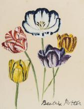 Potter (Beatrix, attributed to) A group of striped tulips, watercolour and body colour, [c.1900]