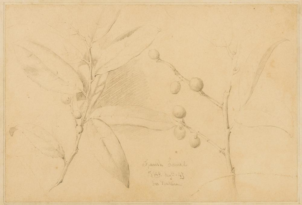 Prints & Drawings.- Ward (James) Spanish Laurel [...], Aug '43, fm. Nature, 1843; and group of 18 miscellaneous prints and caricatures, 18th and 19th century (19)