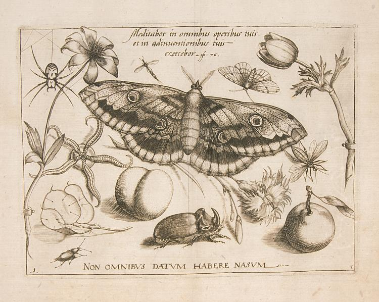 Hoefnagel  (Jacob), [Archetypa Studiaque], six engravings, circa 1592.