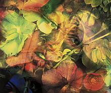 δ Mat Collishaw (b.1966) Flesh Eater 4