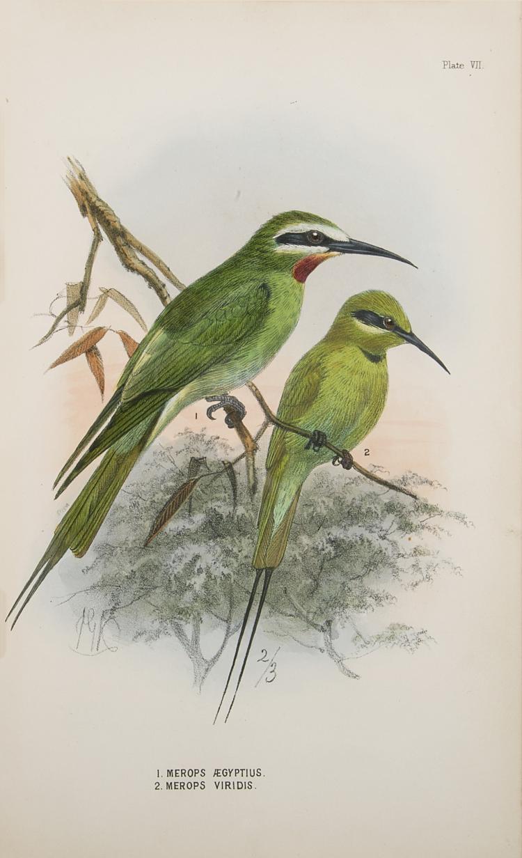 Birds.- Shelley (G.E.) A Handbook to the Birds of Egypt, 1872; and 15 others, birds (16)
