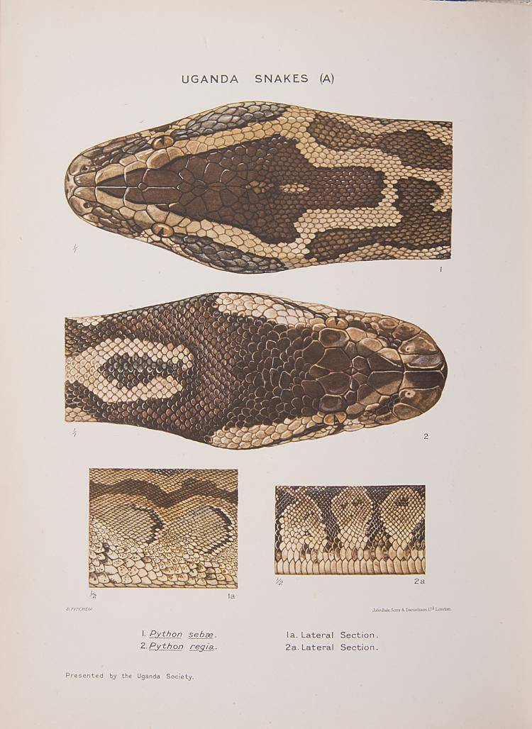 Africa.- Natural History.- Pitman (Capt. Charles R.S.) A Guide to the Snakes of Uganda, one of 500 copies, orig. cloth, Kampala, 1938.
