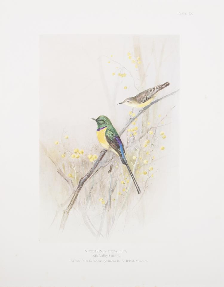 Birds.- Meinertzhagen (Colonel R.) Nicoll's Birds of Egypt, 2 vol., 1930; and 7 others by the same (9)