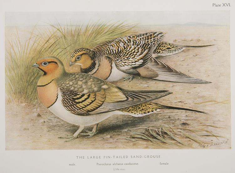Birds.- Baker (E.C.Stuart) The Game-Birds of India, Burma and Ceylon, 3 vol., 1921; and another by the same (4)