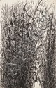 MEMNUNA VILA BOGDANICH (1934-2004), WILD GRASS,