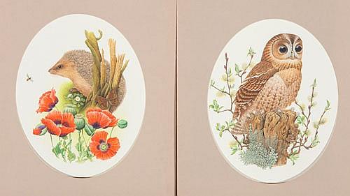 RICHARD MILLINGTON , THE OWL & THE HEDGEHOG