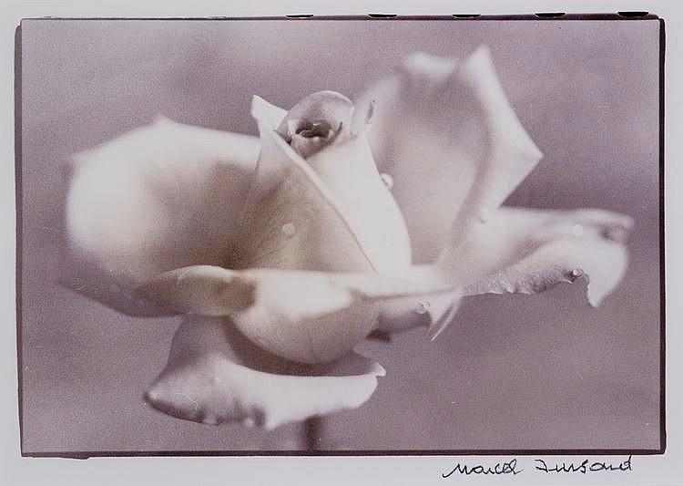 IMSAND Marcel, *1929 [CH].  Rose blanche,