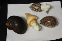Lot of 4 Seashells