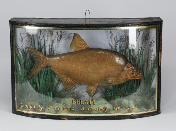 19th c. English fishing trophy, 25