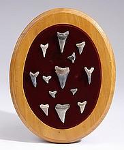 Mounted display of thirteen shark's teeth