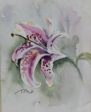 T.P. McDonald, Tiger Lily, flower study, initialled, watercolour, 22cm x 16