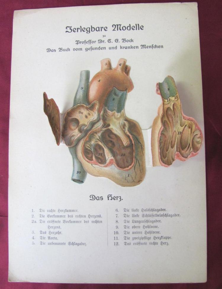 Großzügig Obere Hohlvene Anatomie Zeitgenössisch - Anatomie Ideen ...