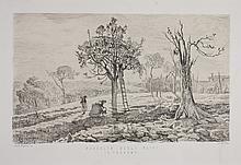 Raccolto degli ulivi in Toscana.