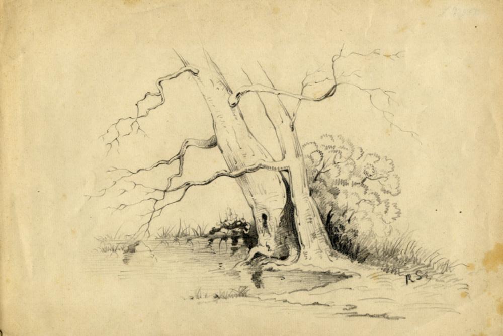 Raffaello Sernesi [attribuito a], Albero.