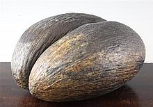 A large coco de mer, 13in.