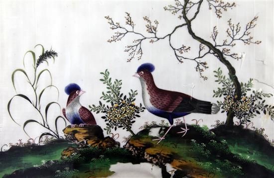 A set of five Chinese pith paintings of birds, c.1900, 20 x 32cm, later mounted and framed