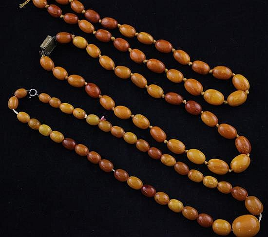 Three single strand graduated oval amber bead necklaces, largest 16.5in.