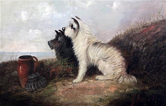 George Armfield (1808-1893) Terriers rabbiting signed, 16 x 24in., unframed
