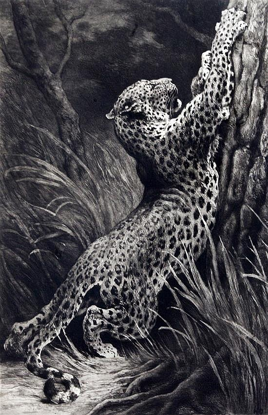 Herbert Dicksee (1862-1942) A leopardess sharpening her claws 20 x 13in.