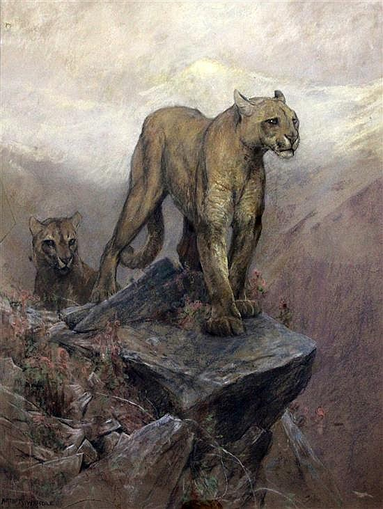 Arthur Wardle (1864-1949) Mountain lions 33 x 27in.