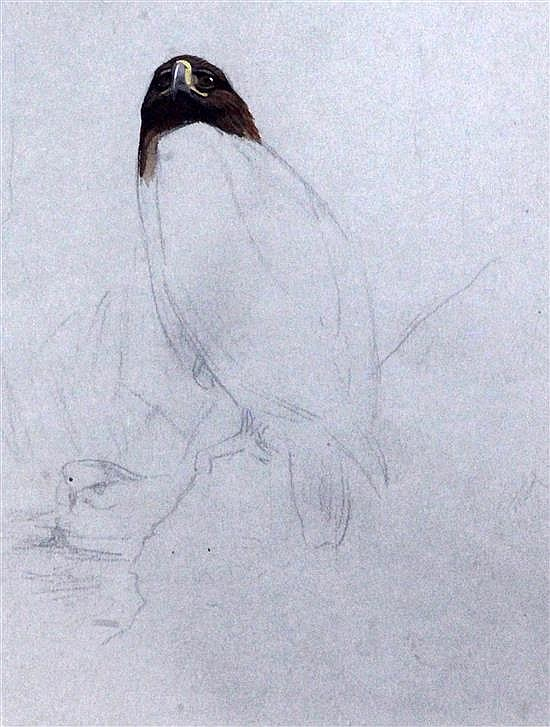 Archibald Thorburn (1860-1935) Sketch of perched eagle 7 x 5.5in.