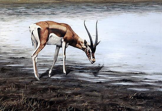 Alan M. Hunt (1947-) Study of a gazelle watering 12.5 x 18in.